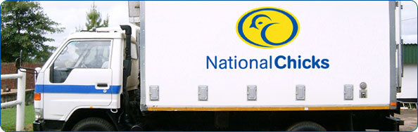 National Chicks have a fleet of temperature-controlled delivery vehicles for transporting day-old chicks